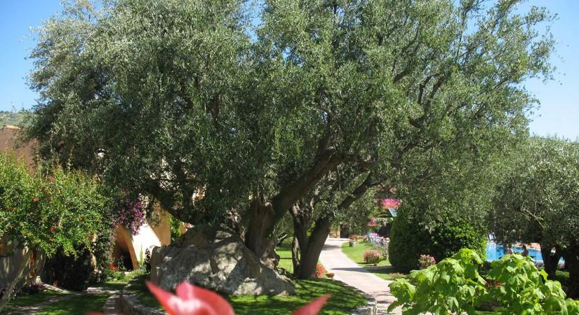 Villaggio L'Olivara Residence | Foto 4